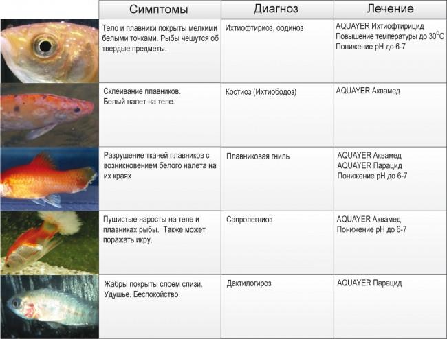 проведения, список почему рыб тянет к весам подзабытая