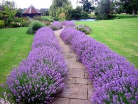 Бордюр из цветов для садовой дорожки